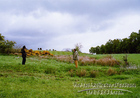 gallowhill02.jpg