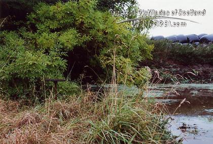 http://lostdistillery.com/photos/annandale07.jpg