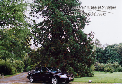 http://lostdistillery.com/photos/ryefield11.jpg